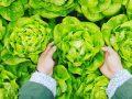 Edelstahl Salatschleuder: Test & Empfehlungen (02/20)