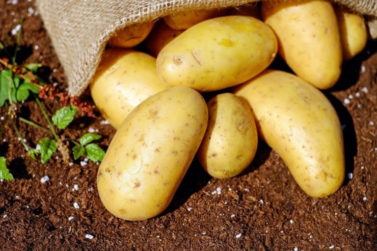 Kartoffelpresse-1
